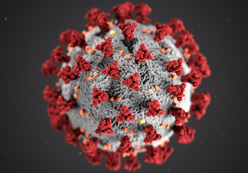 A Job Search During the Time of Coronavirus